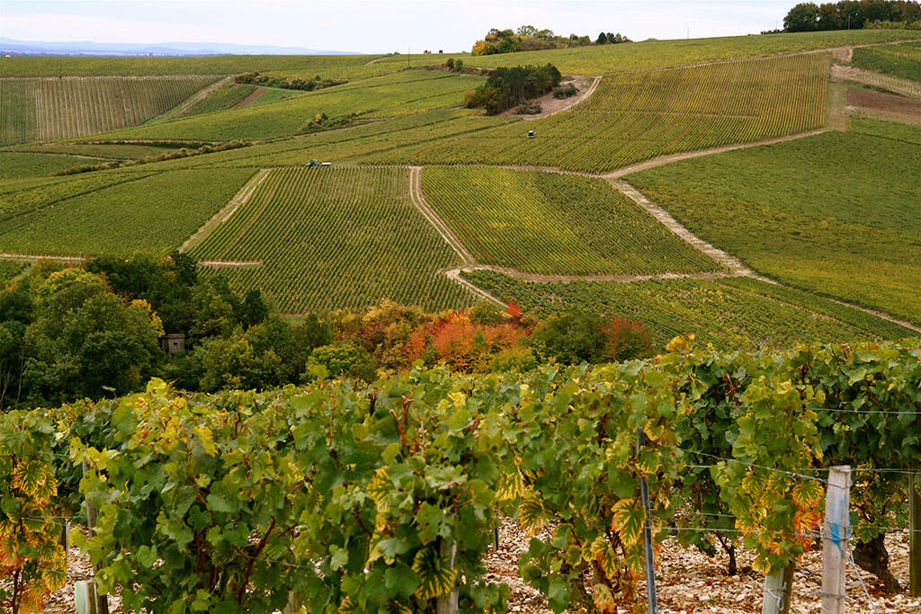 Vezelay region vineyards