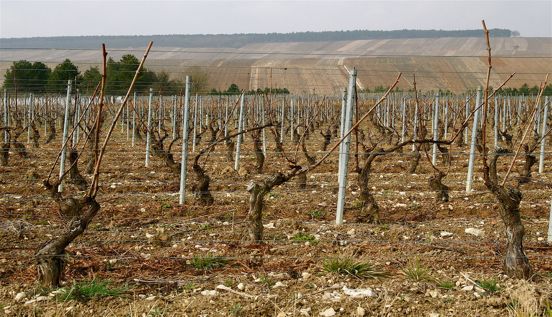 Vineyards near Chateau de Mailly